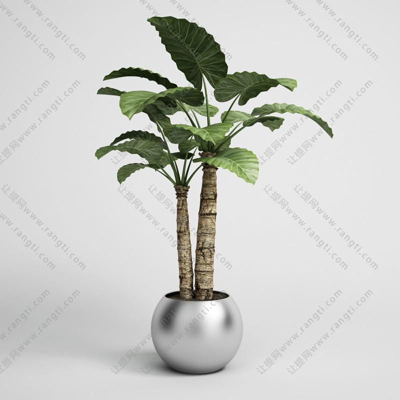 海芋盆栽植物、不锈钢花盆3D模型
