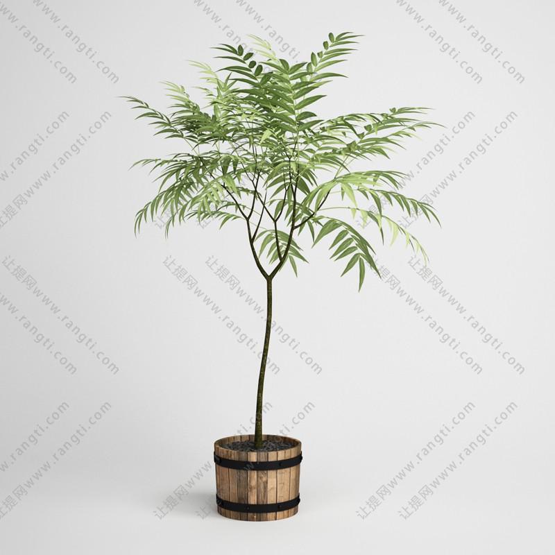 袖珍竹盆栽植物、木质花盆3D模型