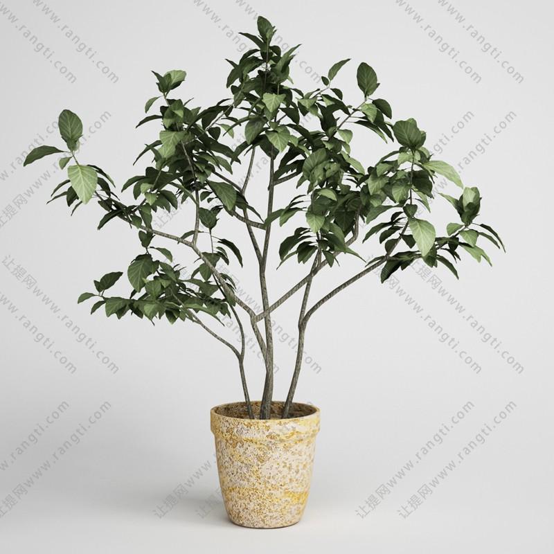 多枝盆栽植物、绿植3D模型