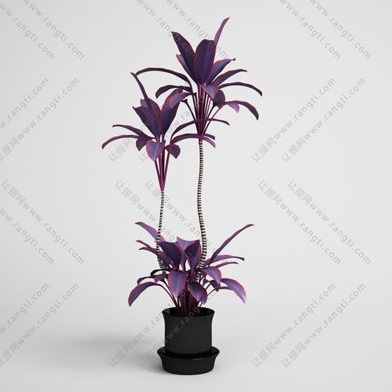 朱蕉盆栽植物、绿植3D模型