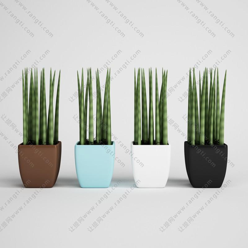 虎皮兰盆栽植物、绿植3D模型