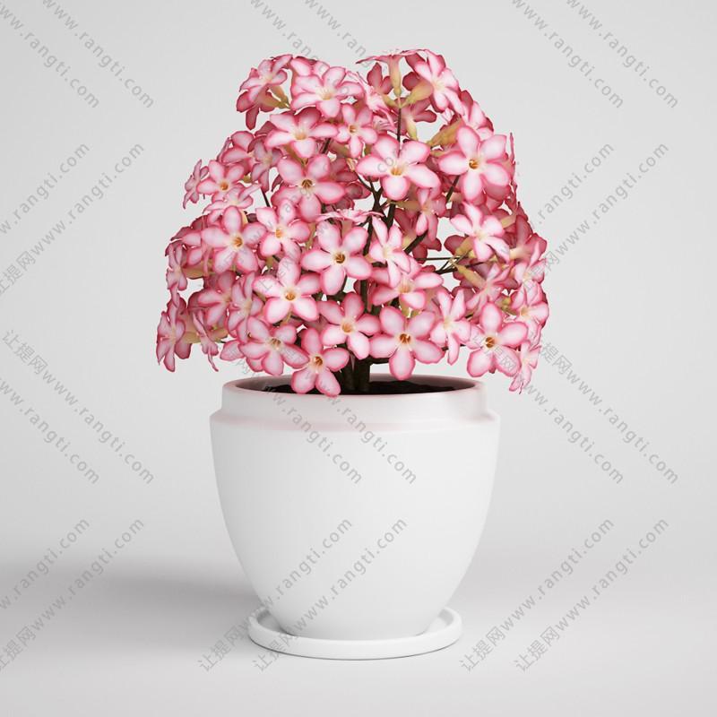 植物盆栽花朵、花卉3D模型