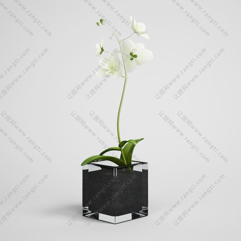 蝴蝶兰盆栽植物、绿植3D模型