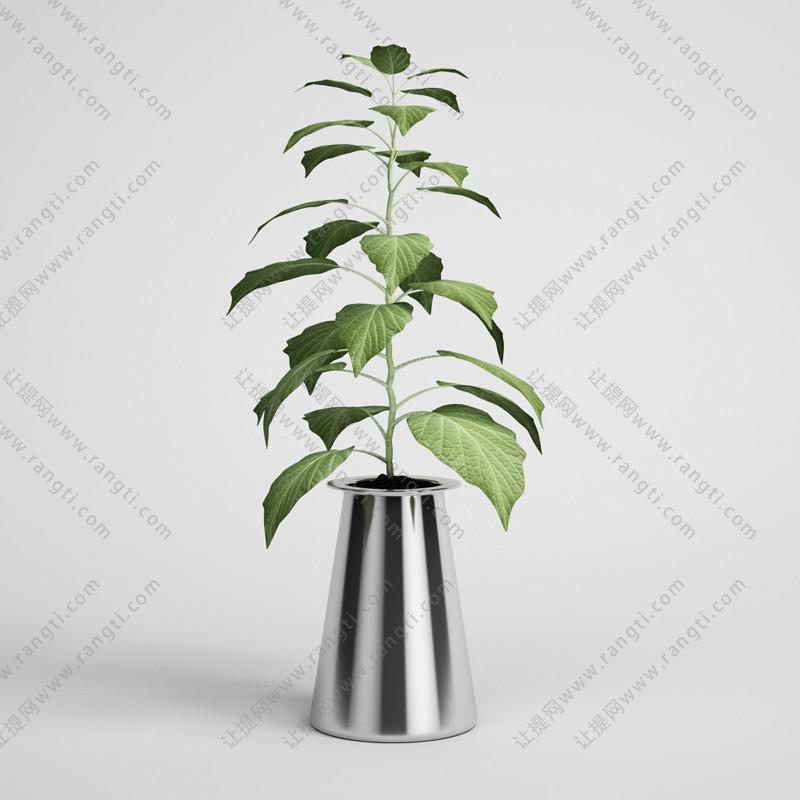 大叶植物花卉、绿植3D模型