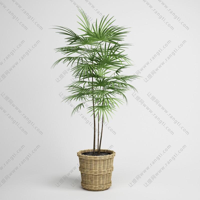 棕竹盆栽植物、藤编花盆3D模型