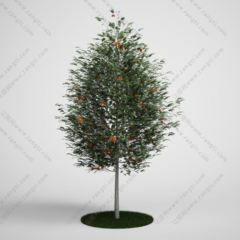 橙色花朵中高乔木、花树3D模型
