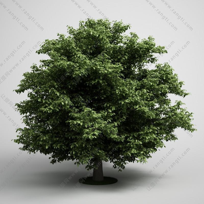 低矮景观树木3D模型
