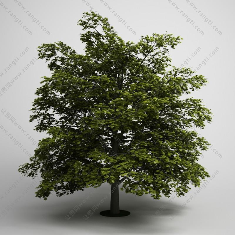 中等尺寸景观树木3D模型