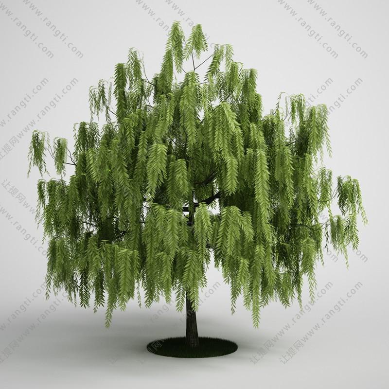 柳树、树木、乔木3D模型