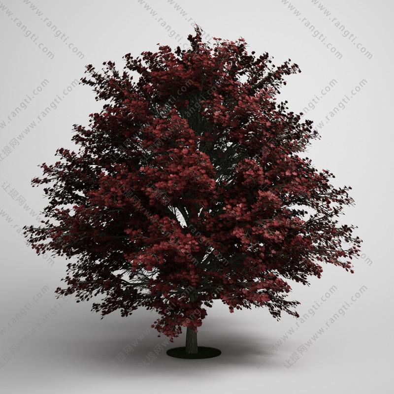 红叶矮树、乔木3D模型