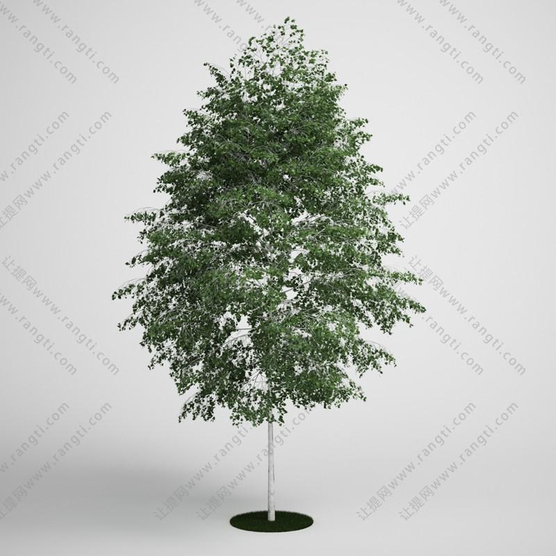 阔叶树、乔木3D模型