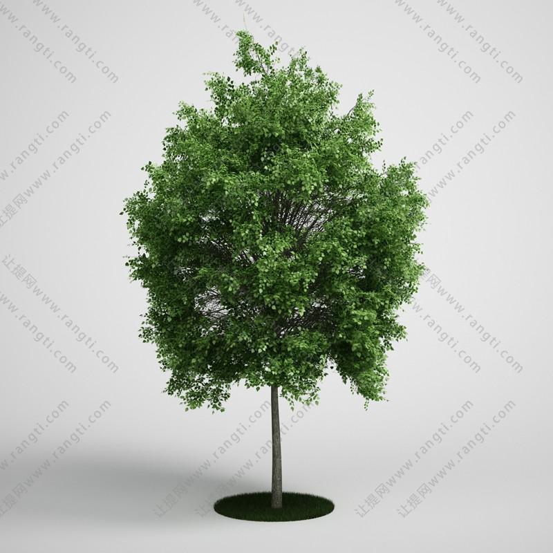 道旁树木、乔木植物3D模型