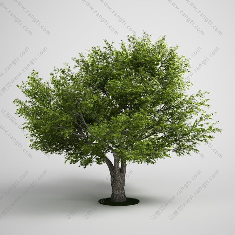 低矮分叉树木、乔木3D模型
