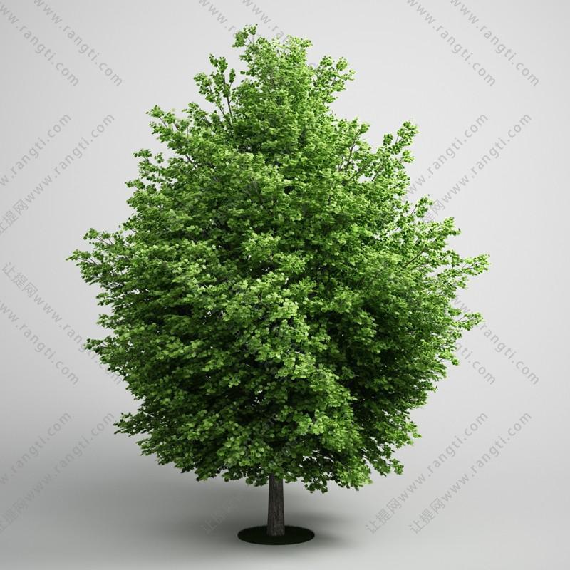 低矮景观树、乔木绿植3D模型