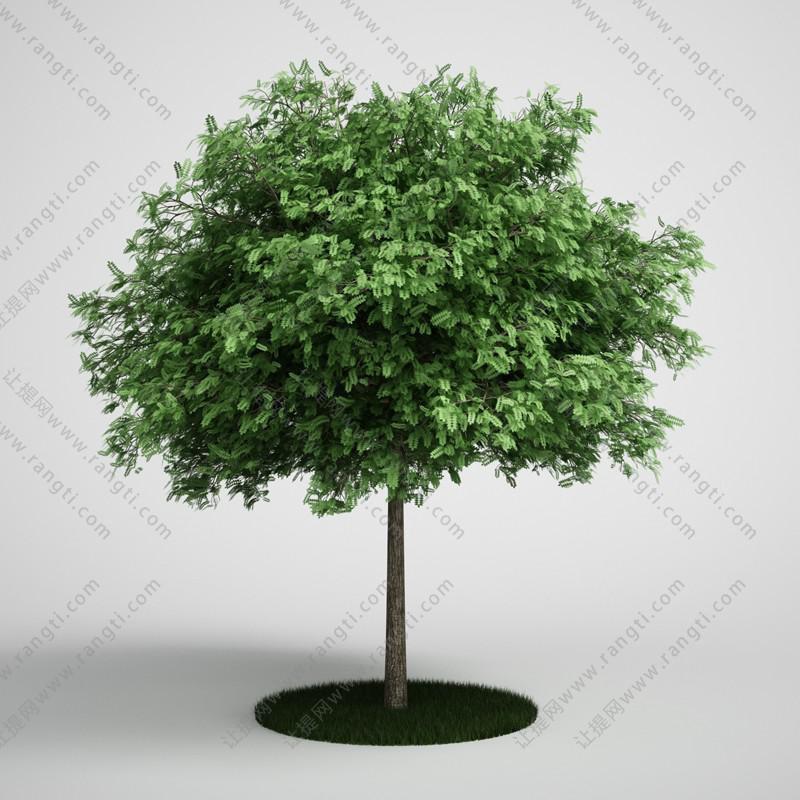 矮小景观树木、乔木3D模型