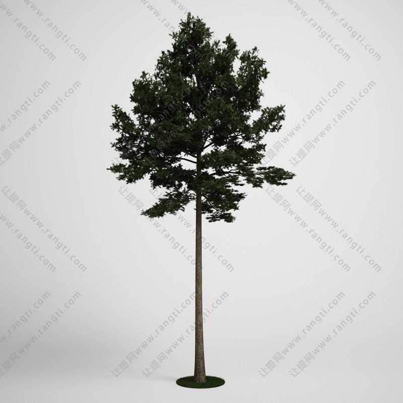 高杆树木、乔木3D模型