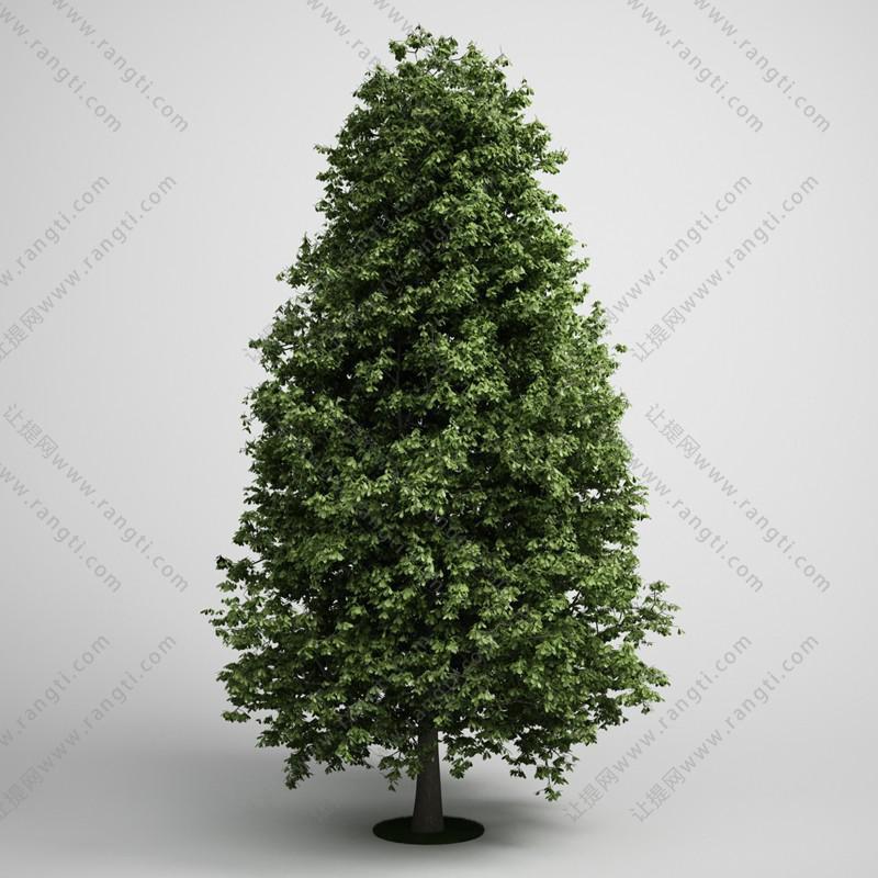 塔式景观树木3D模型