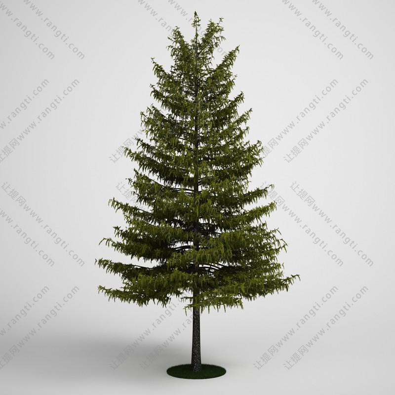 绿叶红果树木、乔木3D模型