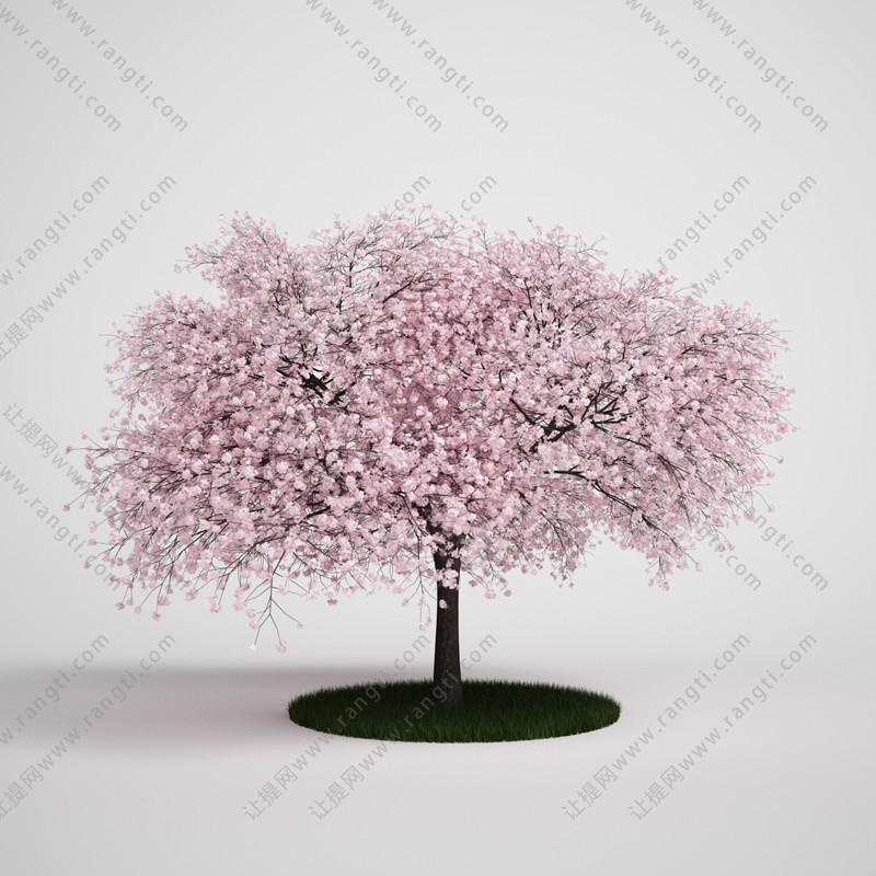 桃树、桃花树、乔木3D模型