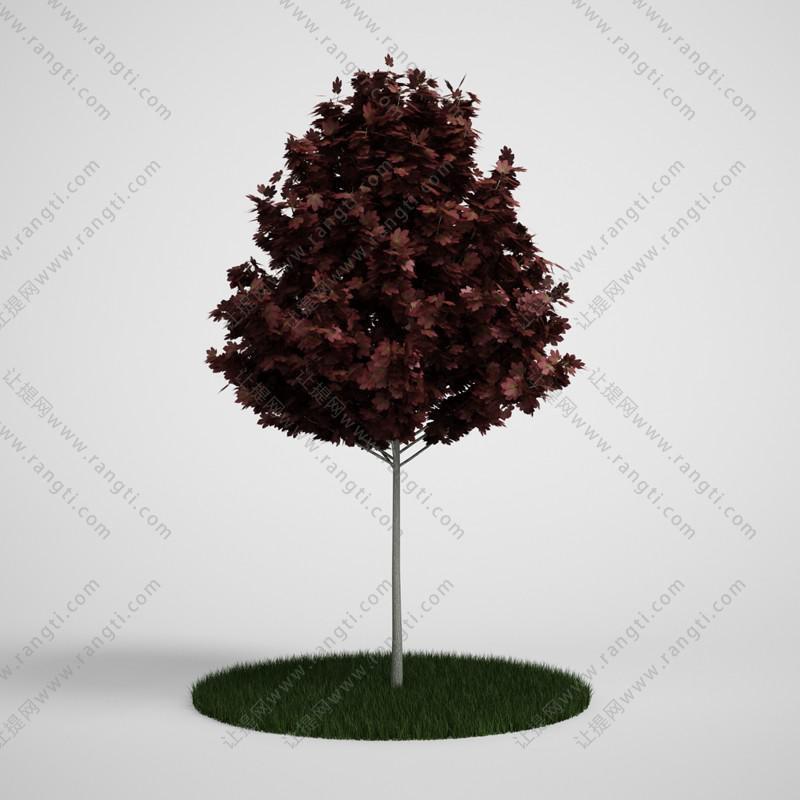 红叶树木、乔木植物3D模型