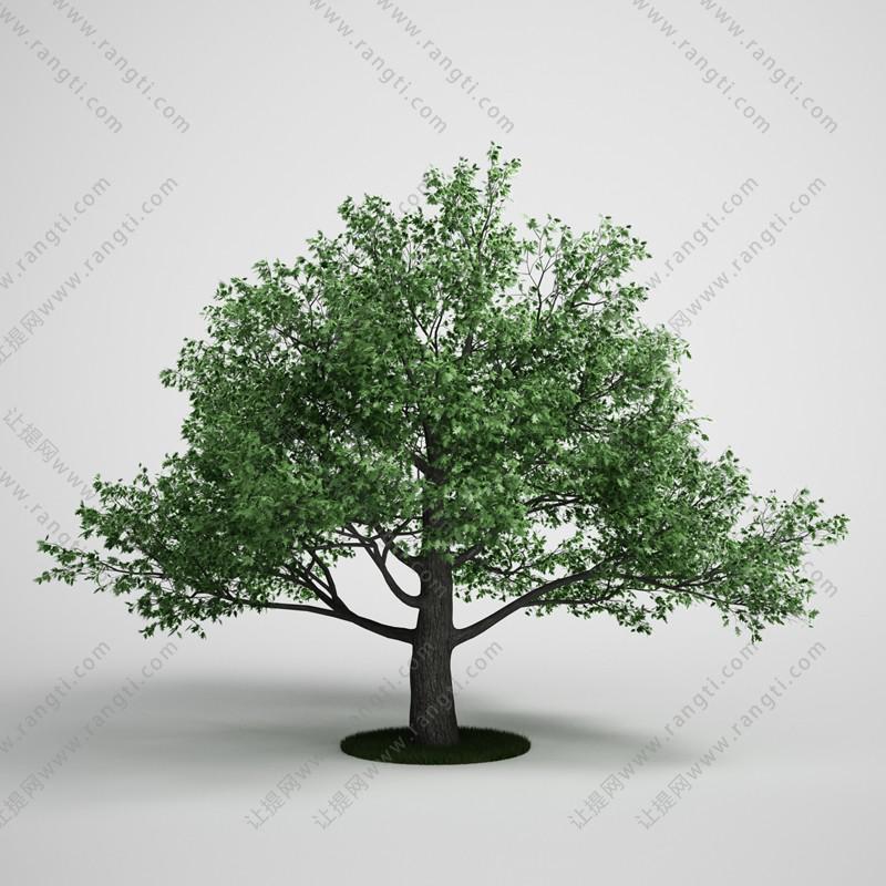 低矮多分叉树木、乔木3D模型