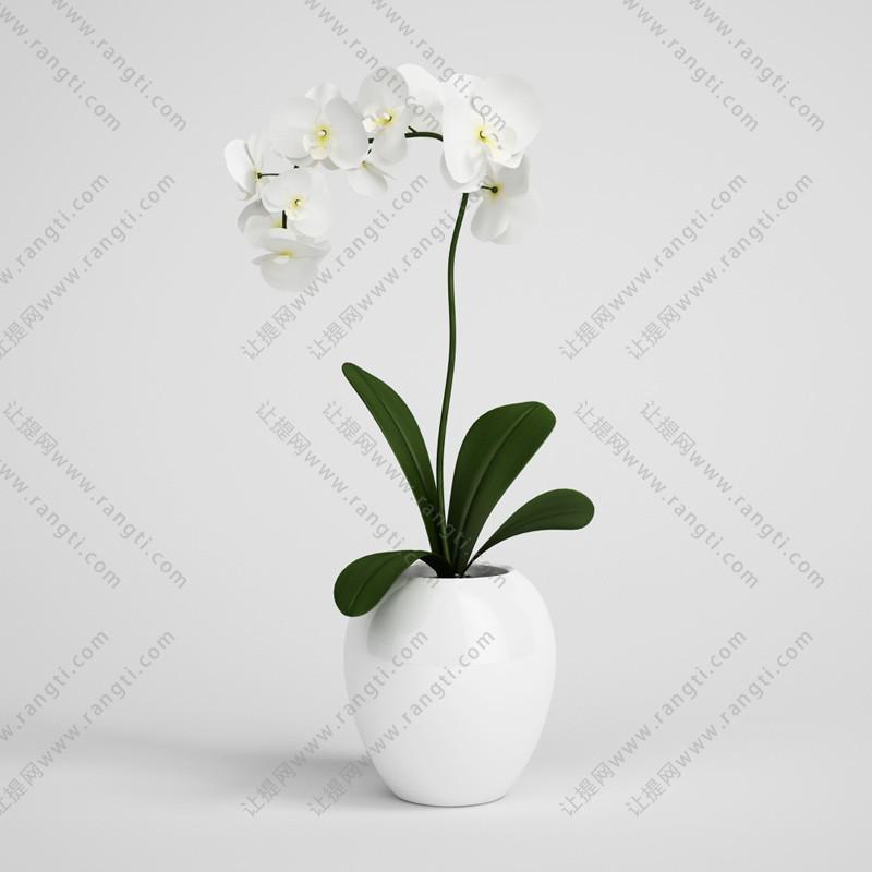 白色蝴蝶兰花瓶花卉、花艺3D模型
