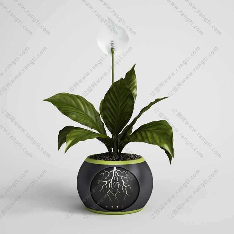 白鹤芋盆栽花卉3D模型