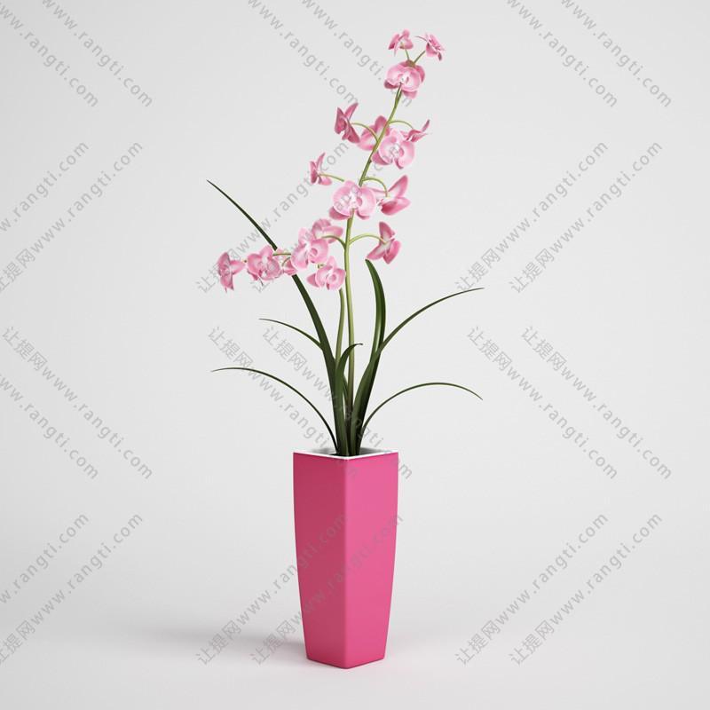 粉红蝴蝶兰、花瓶花卉3D模型